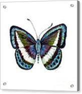 40 Danis Danis Butterfly Acrylic Print