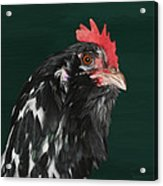 47. Bearded Hen Acrylic Print