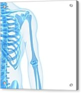 Upper Body Bones, Artwork Acrylic Print