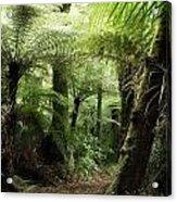 Jungle 2 Acrylic Print