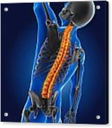 3d Medical Man With Skeleton Acrylic Print
