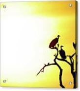 African Birds Acrylic Print