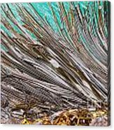 Bull Kelp Blades On Surface Background Texture Acrylic Print by Stephan Pietzko