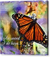 Butterfly Scripture Acrylic Print