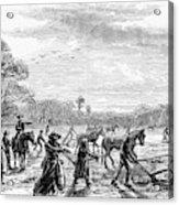 Cotton Plantation, 1867 Acrylic Print