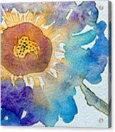 Dahlias Collection Acrylic Print