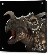 Dinosaur Einiosaurus Acrylic Print