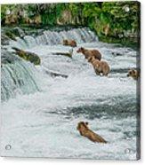 5 Grizzlies Acrylic Print