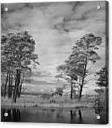 Infrared Picture Of The Nature Area Dwingelderveld In Netherlands Acrylic Print