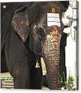 Lakshmi Temple Elephant Acrylic Print