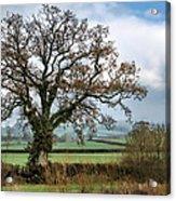 Lower Bruckland - Devon Acrylic Print