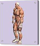 Misc. Anatomy Images Acrylic Print