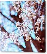 New Jersey Spring Acrylic Print