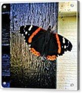 Phoenician Butterfly Acrylic Print