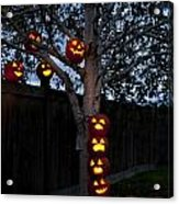 Pumpkin Escape Over Fence Acrylic Print
