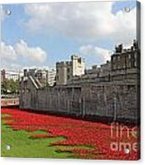 Remembrance Poppies At Tower Of London Acrylic Print
