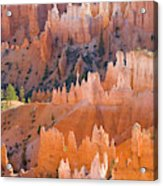 Sandstone Hoodoos In Bryce Canyon  Acrylic Print