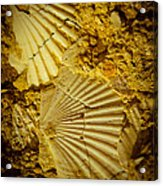 Seashell In Stone Acrylic Print
