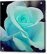 Solitary Rose Acrylic Print