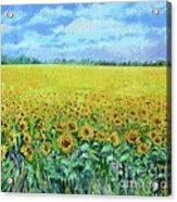 Sunflower Field Under Blue Skies Acrylic Print