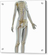 The Skeleton Female Acrylic Print