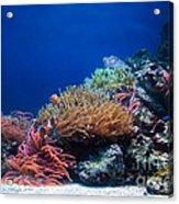 Underwater Life Acrylic Print