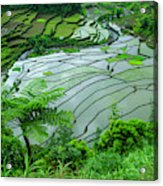 Unesco World Heritage Site, Rice Acrylic Print