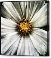 50 Shades Of Flower Acrylic Print