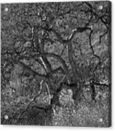 50 Shades Of Gray Trees Acrylic Print