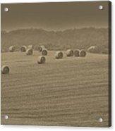50 Shades Of Hay Acrylic Print