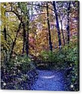 A Path In The Woods Acrylic Print