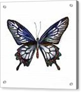 54 Ceylon Rose Butterfly Acrylic Print