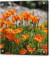 547 Cf Orange Green And Gray Acrylic Print