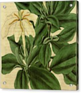 Botanical Print By Sir William Jackson Hooker Acrylic Print