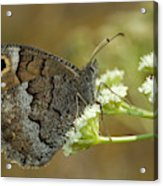 Nature And Travel Images Acrylic Print