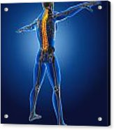 3d Medical Man With Skeleton Acrylic Print by Kirsty Pargeter