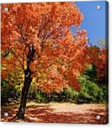 A Blanket Of Fall Colors Acrylic Print