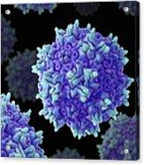Adeno-associated Virus Acrylic Print