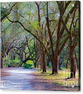 Allee Of Oaks Acrylic Print