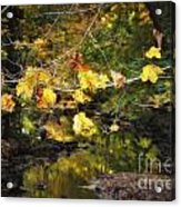 Autumn 2013 Acrylic Print