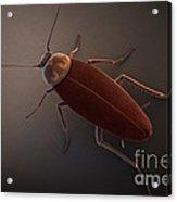 Cockroach Acrylic Print