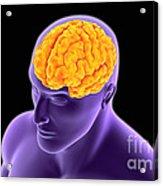 Conceptual Image Of Human Brain Acrylic Print