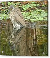 Florida Birds  Acrylic Print