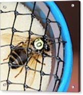 Honeybee Radar Tagging Acrylic Print