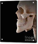Human Skull Acrylic Print