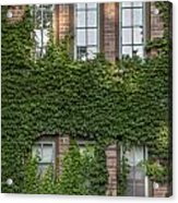 6 Ivy Windows Acrylic Print