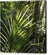 Jungle Light Acrylic Print