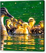 Mallard Mom Acrylic Print
