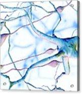 Nerve Cells Acrylic Print