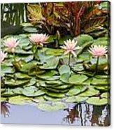 6 Pink Waterlilies Acrylic Print